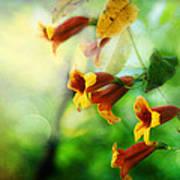 Flowers On The Vine Art Print