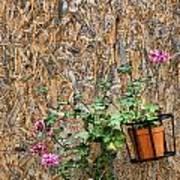 Flowers On Wall - Taromina Art Print