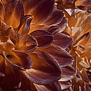 Flowers Should Also Turn Brown In Autumn Art Print