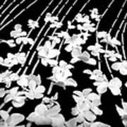 Flowery Flow Art Print