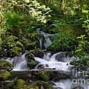 Flowing Creek In Spring  Art Print