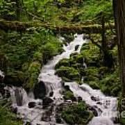 Flowing Stream In Spring Art Print