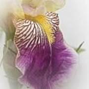 Fl.purple4 Art Print