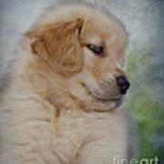 Fluffy Golden Puppy Art Print by Susan Candelario