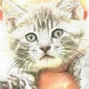 Fluffy Kitten Art Print