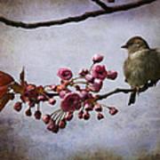 Fluffy Sparrow  Art Print