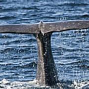 Flukes Of A Sperm Whale 2 Art Print by Heiko Koehrer-Wagner
