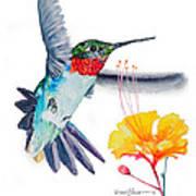 Da177 Flutter By Daniel Adams Art Print