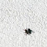 Fly On A Wall Art Print