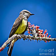 Flycatcher Art Print
