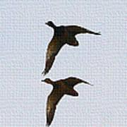 Flying Fast Ducks Art Print