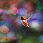 Flying Hummingbird And Bokeh Art Print
