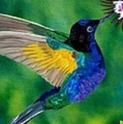 Flying Jewel Art Print