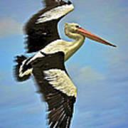 Flying Pelican 4 Print by Heng Tan