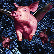 Flying Pigs Over San Francisco - Square Art Print