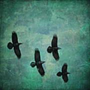 Flying Ravens Art Print