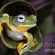 Flying Tree Frog Art Print by Linda D Lester
