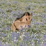 Foal In The Lupine Art Print