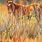 Foal In The Sticks Art Print