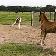 Foals At Play Art Print
