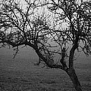 Fog And Solitude Art Print
