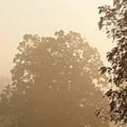 Fog Over Countryside Art Print