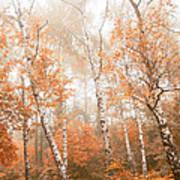 Foggy Autumn Aspens Art Print