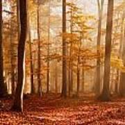 Foggy Beech Forest Art Print