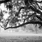 Foggy Morning On Coosaw Plantation Art Print