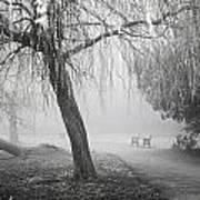 Foggy Willow Art Print