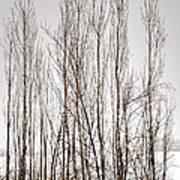 Foggy Winter Tree Fence 13271 Art Print