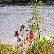 Foliage Along Iowa River Iowa City Ia Art Print