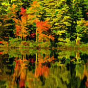 Foliage In New Hampshire Art Print