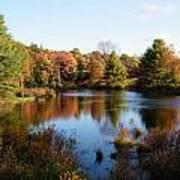 Foliage Pond - Route 66 - Massachusetts Art Print