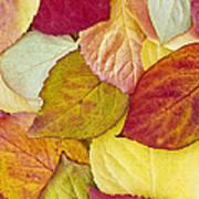 Foliage Quilt Art Print