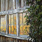Foliage Reflections Art Print
