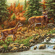 Whitetail Deer - Follow Me Print by Crista Forest
