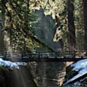 Footbridge Near Sol Duc Falls, Olympic Art Print