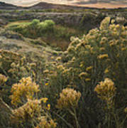 Foothills Sage Art Print by Michael Van Beber