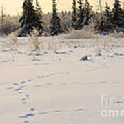 Footprints In Fresh Snow Art Print
