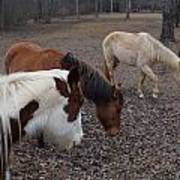 Foraging Horses Art Print