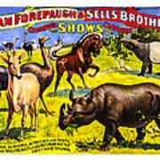 Forepaugh And Sells Wondrous Wild Beasts Art Print