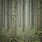 Forest #1 Art Print
