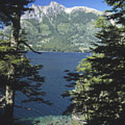 Forest And Lakes Lanin National Park Art Print