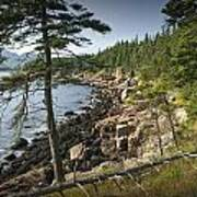 Forest And Rocky Shore In Acadia National Park Art Print