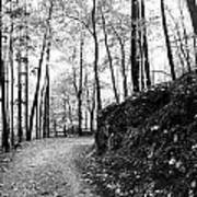 Forest Black And White 6 Art Print