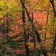 Forest Blush Art Print