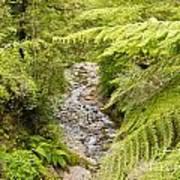 Forest Creek In Lush Rainforest Jungle Of Nz Art Print
