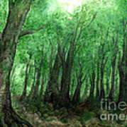 Forest Entrance Art Print