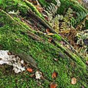 Forest Floor Fungi And Moss Art Print